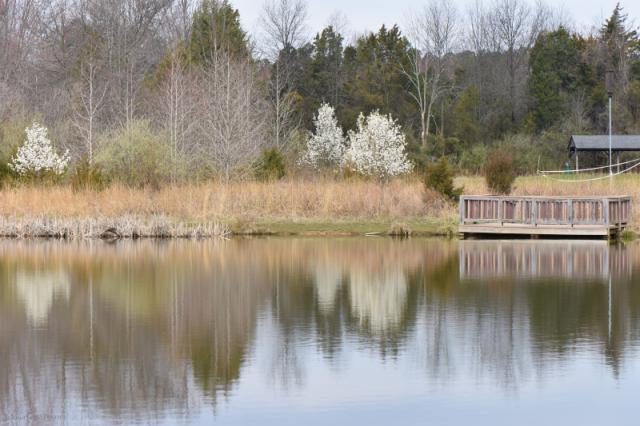 Frogshackle Pond